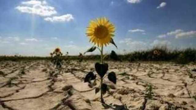 Cum evităm efectele negative ale secetei în agricultură