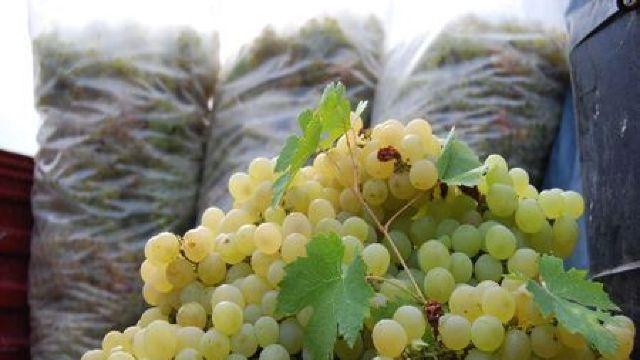 Producătorii de struguri de masă riscă să piardă piețele de export
