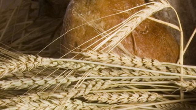 Recolta de grâu a depăşit în acest an un milion de tone