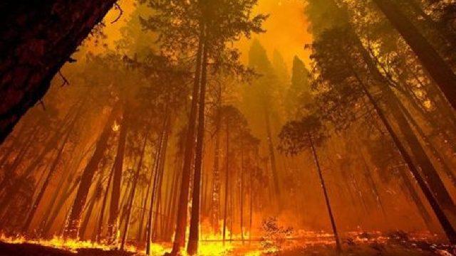Fumul degajat de incendiile forestiere din Siberia a ajuns deasupra Polului Nord pentru prima dată în istoria cunoscută