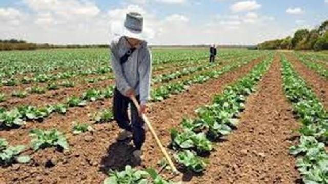 MAIA va pregăti o inițiativă legislativă privind asigurarea în agricultură