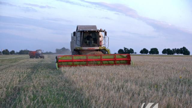 Roada grâului de toamnă se aşteaptă că ar putea întrece media pentru ultimii zece ani