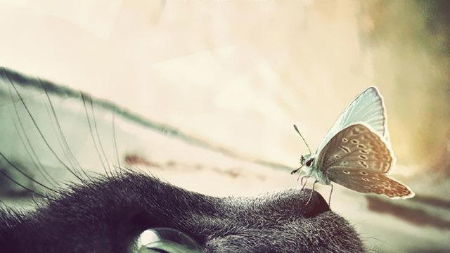 FOTO // Imagini de vis cu animale și fluturi