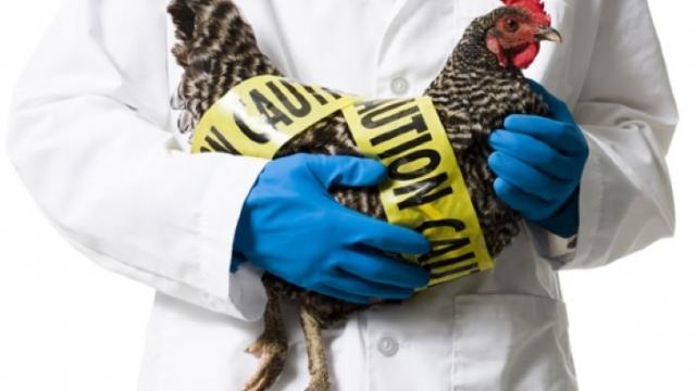 ANSA interzice temporar importul de păsări și carne de pasăre din regiunea Vinnița, Ucraina