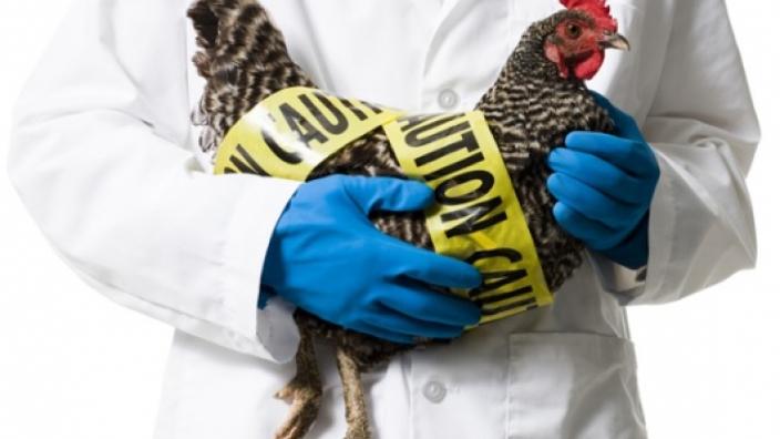 OIE | Caz de gripă aviară înalt patogenă, depistat în Rusia