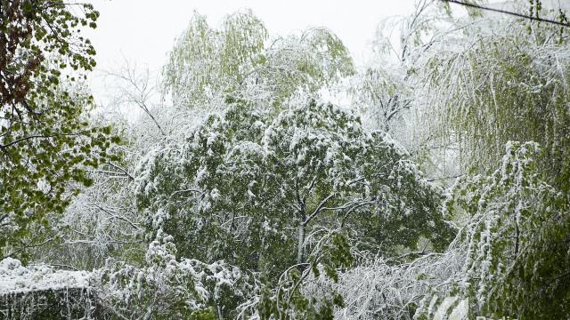 UPDATE | Peste 100 de copaci s-au prăbușit în Chișinău; au fost înregistrate 18 accidente rutiere