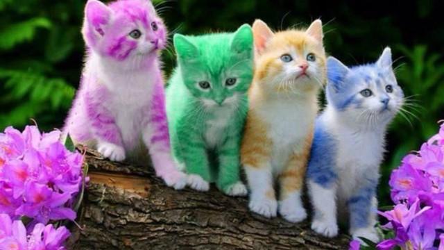 Astăzi este Ziua internațională a pisicii