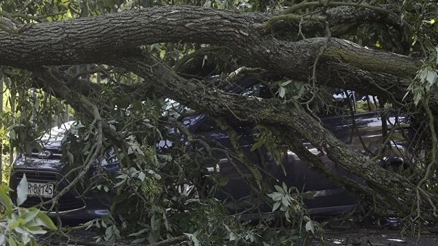 Patru persoane și-au pierdut viața și alte 36 au fost rănite în urma furtunilor violente din Polonia