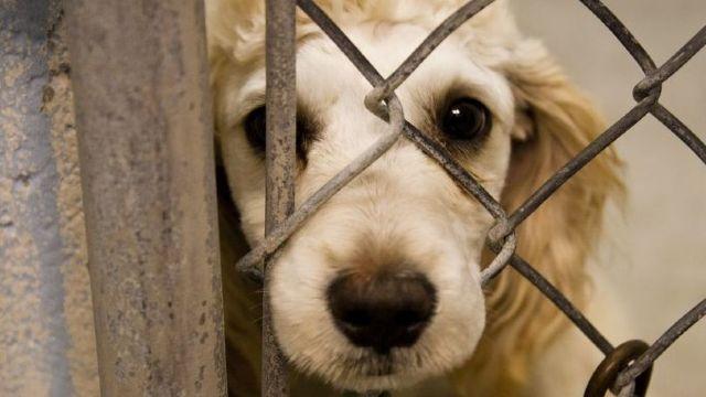 Proiect de lege | Uciderea animalelor de companie va fi pedepsită penal