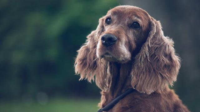 O italiancă a primit două zile libere plătite pentru a-și îngriji câinele bolnav