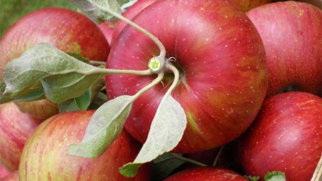 Rosselhoznadzor a interzis importul în Rusia a încă 20 de tone de mere din R.Moldova