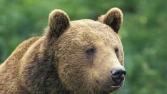 Mai mulţi urşi au răscolit morminte dintr-un cimitir din Kamchatka, aparent în căutare de hrană