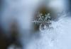VIDEO | Zăpadă de jumătate de metru în Franța și Italia. Este cea mai abundentă ninsoare din ultimii 15 ani