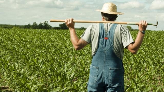 Producătorii agricoli pot depune de astăzi cereri pentru subvenții