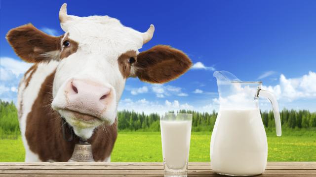 STUDIU | Multe produse lactate populare conțin... prea puțin lapte, iar grăsimi vegetale – peste normă
