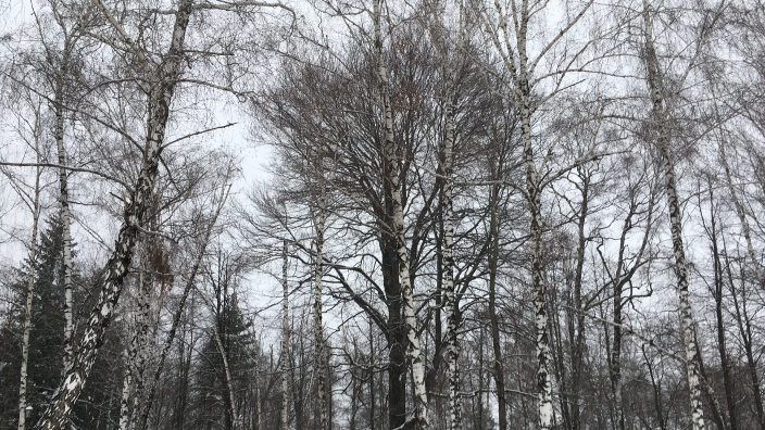 Maluri de Prut | Pădurea de Argint din poemul eminescian, un loc real într-o iarnă de poveste