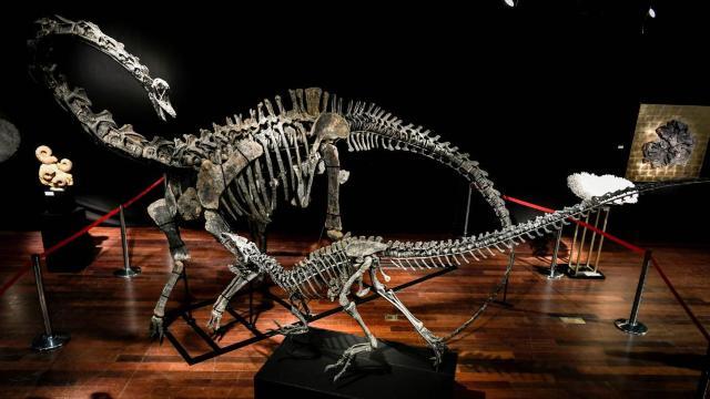 Peste 2,8 milioane de euro pentru două schelete de dinozauri din Jurasic, la o licitație de la Paris