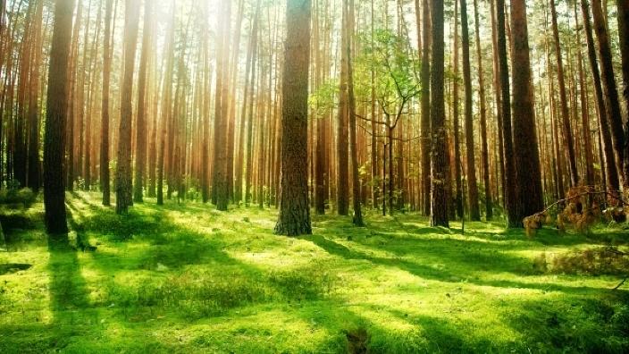 O pădure dedicată Centenarului Marii Uniri va fi plantată de silvicultorii din România și Republica Moldova