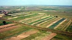 Noul Cod Funciar | Terenurile agricole nu vor putea fi cumpărate de cetățeni străini