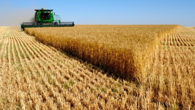 Precipitaţiile din ultima perioadă au dus la prelungirea campaniei de recoltare a cerealelor