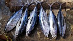 Somalia exportă din nou peşte în Kenya, după 30 de ani de pauză