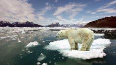 Peste 20 de ţări doresc înăsprirea obiectivelor climatice până în 2020
