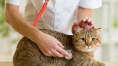 Sterilizarea animalelor de companie, una din soluțiile problemei animalelor fără adăpost