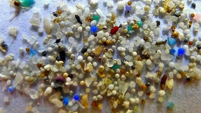 Greenpeace a anunţat că a descoperit microparticule de plastic în Antarctica