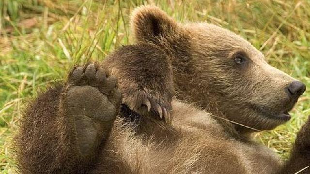 Doi pui de urs, salvaţi de poliţiştii din Covasna după ce mama lor a fost lovită de tren