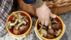 Ministerul Sănătății avertizează populația privind consumul de ciuperci