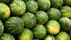ANSA | Pepenii verzi şi galbeni care vor depăşi norma admisă de pesticide şi nitraţi vor fi lichidați