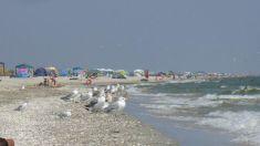 Plajele sălbatice din Rezervaţia Biosferei Delta Dunării, tot mai căutate