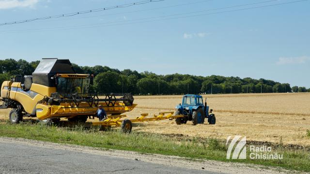 Ploile pun în pericol campania de recoltare a cerealelor și pot cauza prejudicii materiale agricultorilor