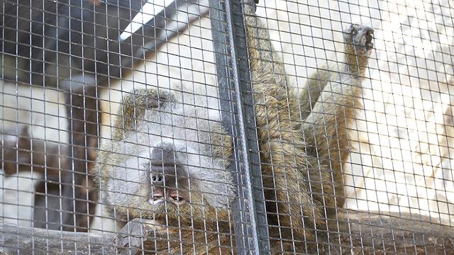 Grădina Zoologică din Chișinău a expus publicului puii născuți recent