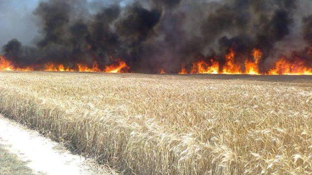 Aproximativ 14 hectare de grâu au ars ieri, lângă o localitatea din raionul Orhei