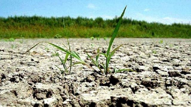 Seceta aruncă în aer preţul cerealelor în Europa