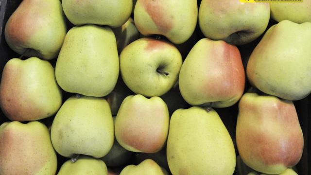 Rusia interzice importurile de fructe din Serbia și Macedonia