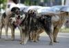 O perioadă, câinii nu vor mai fi ridicați din stradă pentru a fi sterilizați