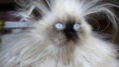 O pisică a lăsat fără curent electric peste 7.000 de persoane