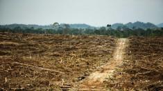 Greenpeace corelează distrugerea pădurii tropicale din Indonezia cu importante branduri globale