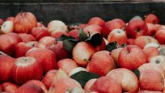 În premieră, merele din R.Moldova vor fi exportate pe una dintre cele mai mari piețe din lume