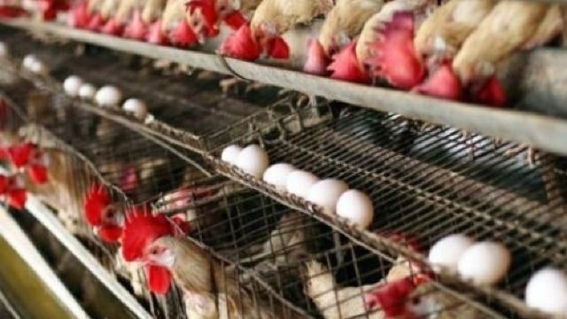 Ouăle şi carnea de pasăre din Moldova nu pot ajunge în UE (Mold-street)