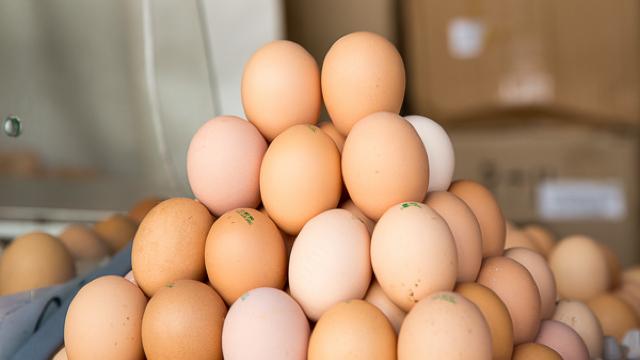 Acțiuni pentru obținerea dreptului de a exporta în UE carne de pasăre și ouă de categoria B
