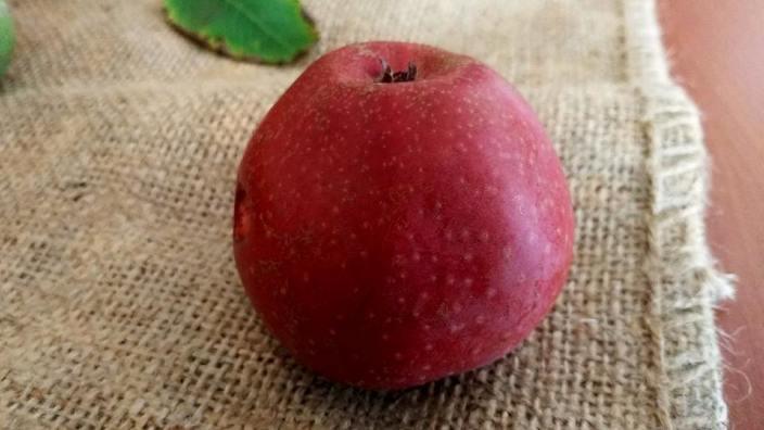 Primul soi de măr cu miezul roșu în R.Moldova. Cum arată și ce gust are fructul (Agrobiznes)