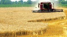 Expiră termenul de depunere a dosarelor pentru solicitarea subvențiilor în agricultură