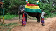 Sri Lanka explorează noi moduri de a proteja elefanţii de a fi ucişi de trenuri