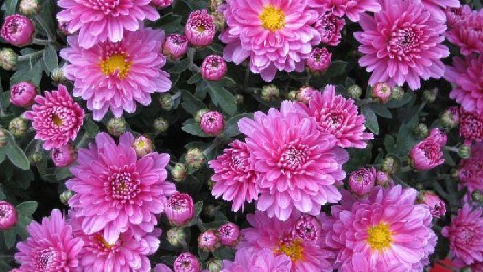 Fonograful de miercuri | Iubirea noastră florile