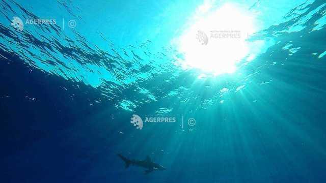 Un barbat din Australia a fost atacat de un rechin de care s-a salvat, lovindu-l cu planșa