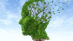 STUDIU   Boala Alzheimer ar putea fi depistată printr-un test de sânge cu 16 ani înainte de apariţia primelor simptome