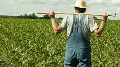 Fermierii se plâng că rămân cu subvențiile neachitate, iar alții au ajuns în prag de faliment
